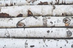 Free Stack Of Birch Logs Wooden Background Stock Photos - 171914623