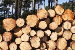 Free Stack Of Logs Stock Photography - 16609372