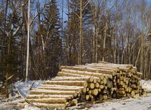 Stack Of Logs In A Taiga Royalty Free Stock Images