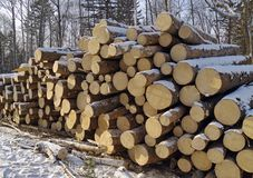 Stack Of Logs In A Taiga Royalty Free Stock Photography