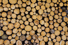 Free Stack Of Wood Royalty Free Stock Photo - 20413975