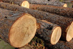 Stack Of Wood Royalty Free Stock Photography