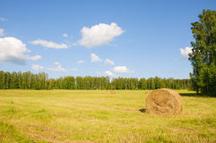Stack oh hay in the field on the edge of the forest Royalty Free Stock Image