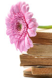 Stack of old books with pink mum flower Royalty Free Stock Photos