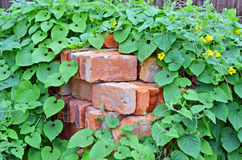 Stack of old brick in plant Royalty Free Stock Image