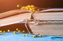 Stack of old worn books with yellow mimosa flowers lit by warm sunlight Royalty Free Stock Image