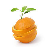 Stack of orange slices Royalty Free Stock Photography