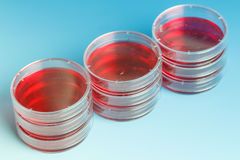 Stack of petri dishes Royalty Free Stock Photography