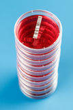 Stack of petri dishes Stock Images