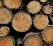Stack / pile of logs Royalty Free Stock Photos
