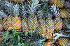 Pine apples Royalty Free Stock Photography