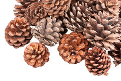 Stack of pine cones Stock Photo