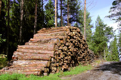 Stack of Pine Logs by Road Stock Photography