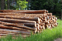 Stack of pine logs in summer forest Stock Photo