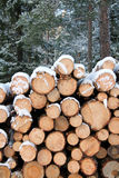Stack of Pine Logs in Winter Snow Stock Images