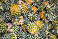Stack of pineapple Royalty Free Stock Photos