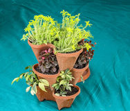 Stack of plants in pots Royalty Free Stock Photos