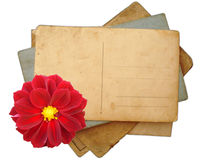 Stack of postcards, photos. Stack of postcards and photos with flower Royalty Free Stock Photos