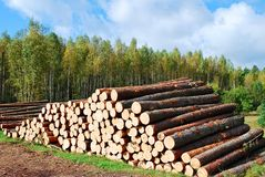 Stack of prepared wood in european forest Stock Image