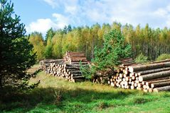 Stack of prepared wood in european forest Royalty Free Stock Image