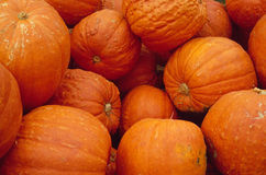 Stack of pumkins Stock Photography