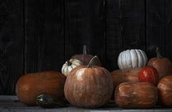 Stack of pumpkins after harvesting Royalty Free Stock Photos