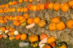 Stack of pumpkins stock photography