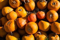 Stack of pumpkins royalty free stock photo