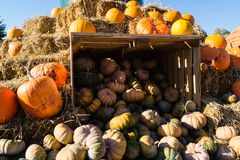 Stack of pumpkins stock photo