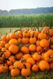 Stack of Pumpkins Royalty Free Stock Image