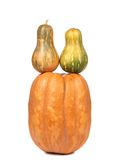 Stack of pumpkins. Royalty Free Stock Photography