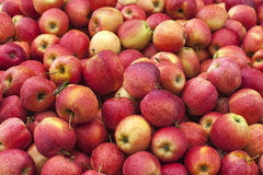 A stack of red apples. Close-up image of a stack of red apples as background Stock Image