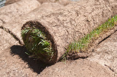 Stack of rolled grass sod for gardening royalty free stock photography