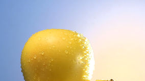 Stack of rotating yellow apples stock video footage