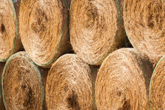 Stack of round hay bales drying outdoors Royalty Free Stock Images