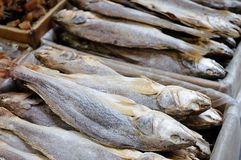 Stack of salted fish royalty free stock image