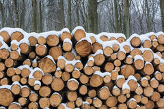 Stack of sawed trees. Stock Images