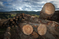 Stack of sawn timber Stock Images