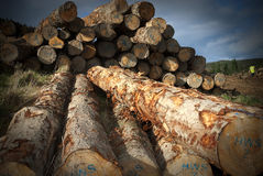 Stack of sawn timber Royalty Free Stock Images