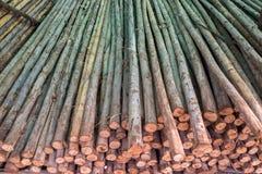 Stack of sawn timber Stock Photos