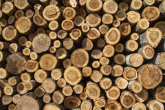 Stack of sawn tree trunks Royalty Free Stock Images
