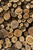 Stack of sawn tree trunks Stock Photo
