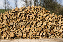 Stack of sawn tree trunks Stock Image