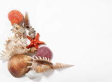 Stack of shells and starfishes. Isolated on white background Stock Images