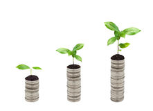 Stack of silver coin and small plant concept Royalty Free Stock Photos