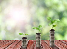 Stack of silver coin and small plant concept Royalty Free Stock Photo