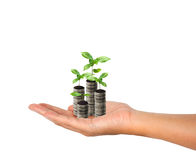 Stack of silver coin and small plant concept growth Royalty Free Stock Images