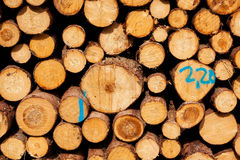 Stack of spruce logs Royalty Free Stock Photography