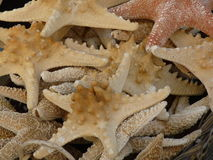 Stack of starfish. At a market in Greece Stock Photos