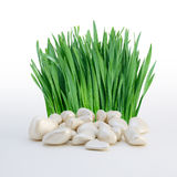 Stack of stones and grass Royalty Free Stock Photo